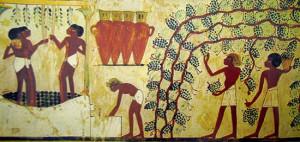 Fig 5 Vendemmia, Pigiatura dell'uva, e riempimento dei contenitori di vino, XVIII dinastia, Tomba di Nakht