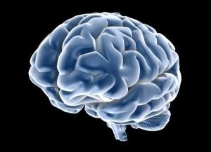neurogenesi ippocampale